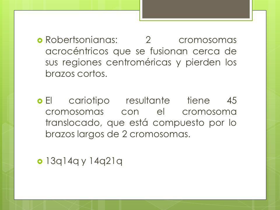 Robertsonianas: 2 cromosomas acrocéntricos que se fusionan cerca de sus regiones centroméricas y pierden los brazos cortos.