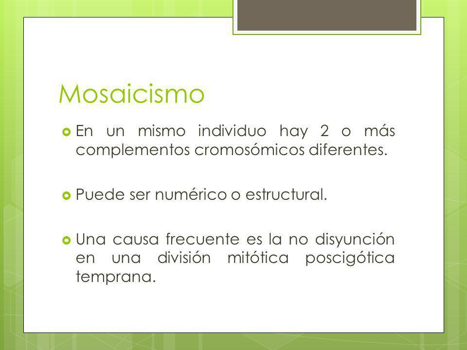Mosaicismo En un mismo individuo hay 2 o más complementos cromosómicos diferentes. Puede ser numérico o estructural.