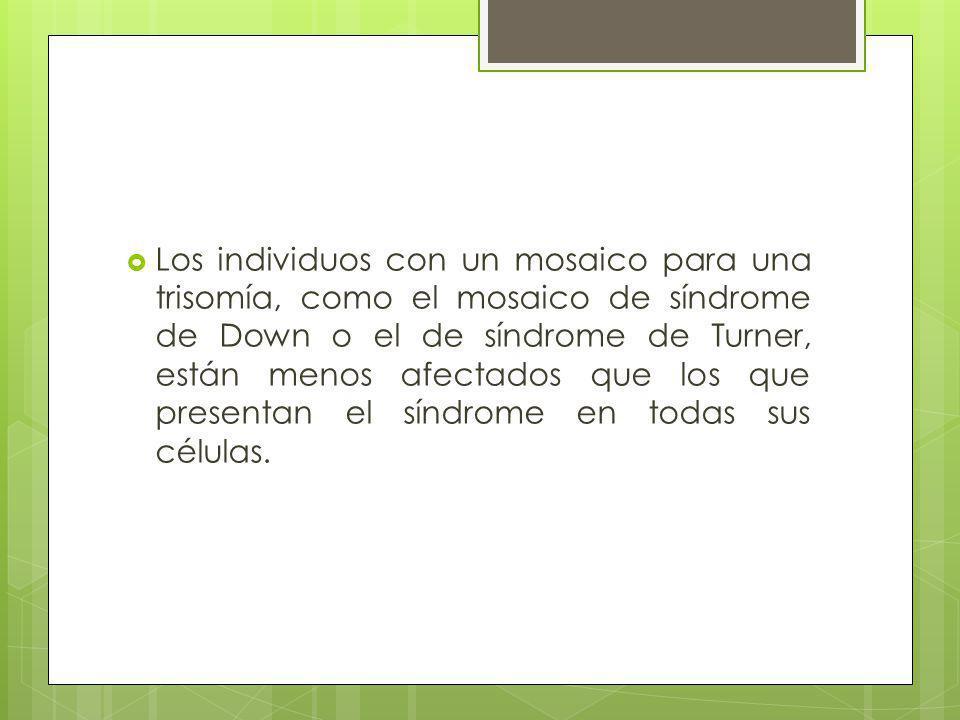 Los individuos con un mosaico para una trisomía, como el mosaico de síndrome de Down o el de síndrome de Turner, están menos afectados que los que presentan el síndrome en todas sus células.