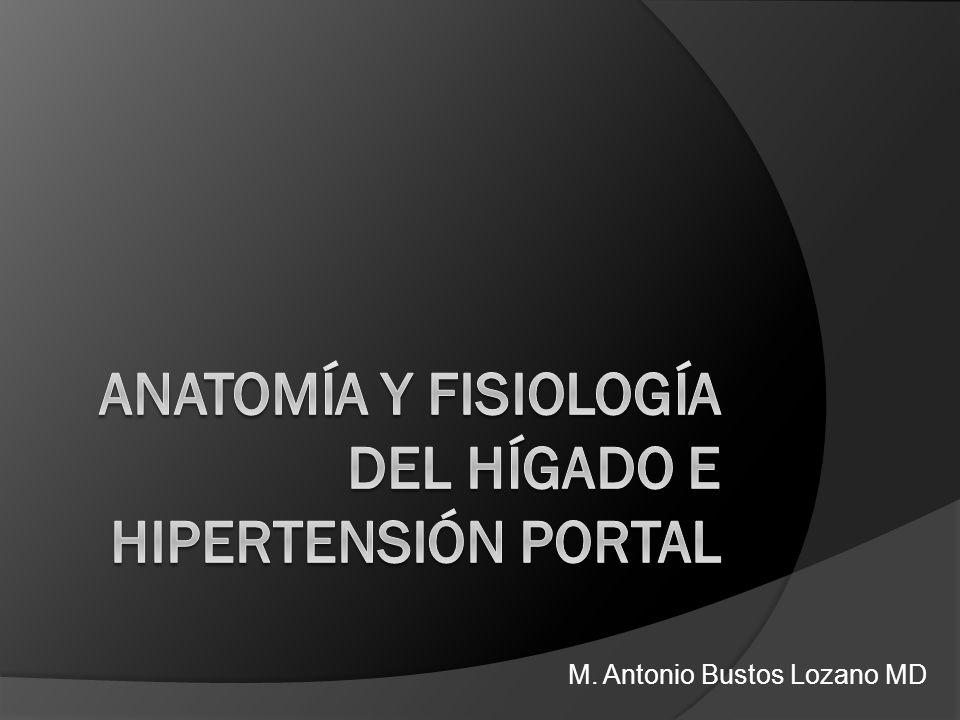 Anatomía y Fisiología del Hígado e Hipertensión Portal