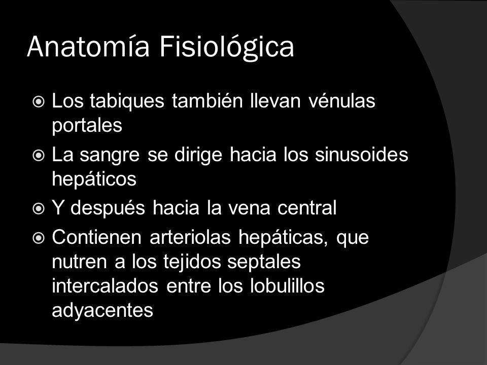 Anatomía Fisiológica Los tabiques también llevan vénulas portales
