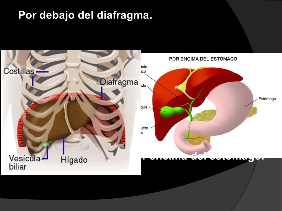 Por debajo del diafragma.