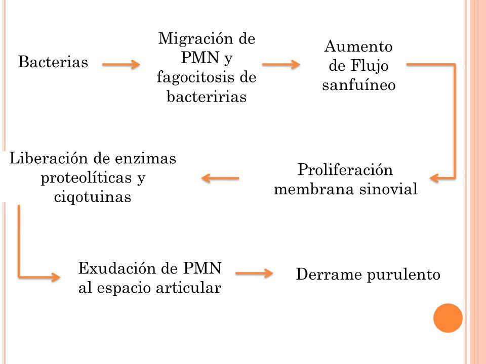 Migración de PMN y fagocitosis de bacteririas