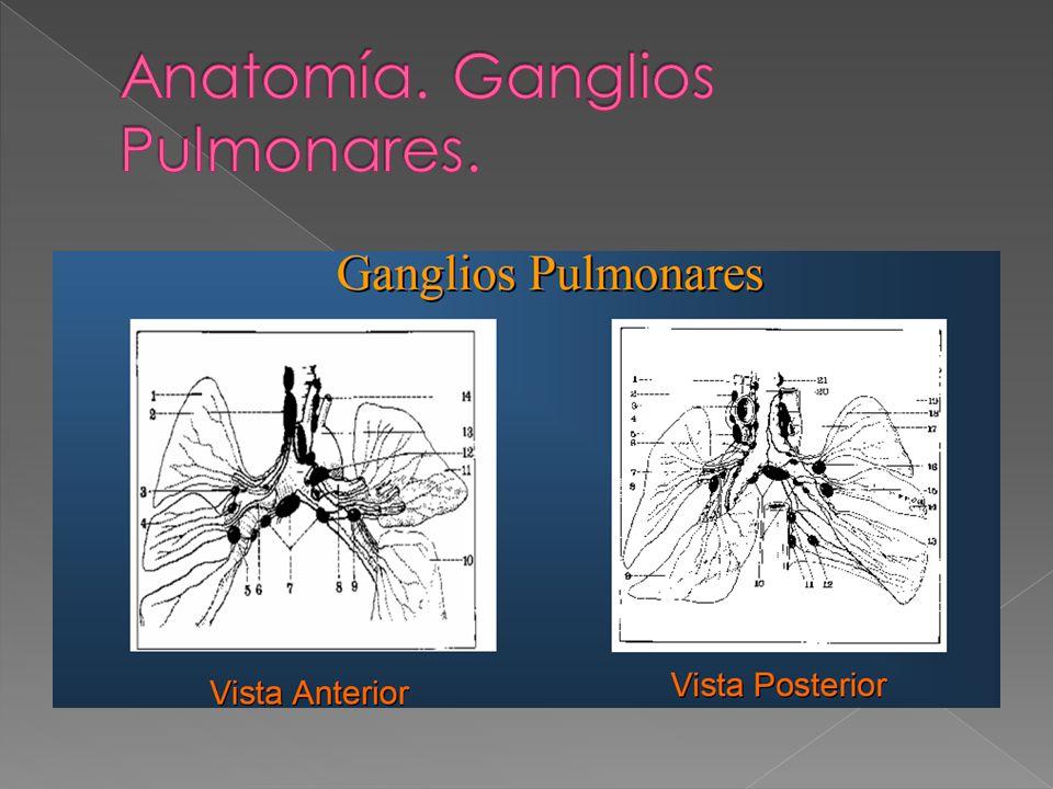 Anatomía. Ganglios Pulmonares.