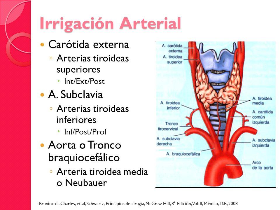 Irrigación Arterial Carótida externa A. Subclavia