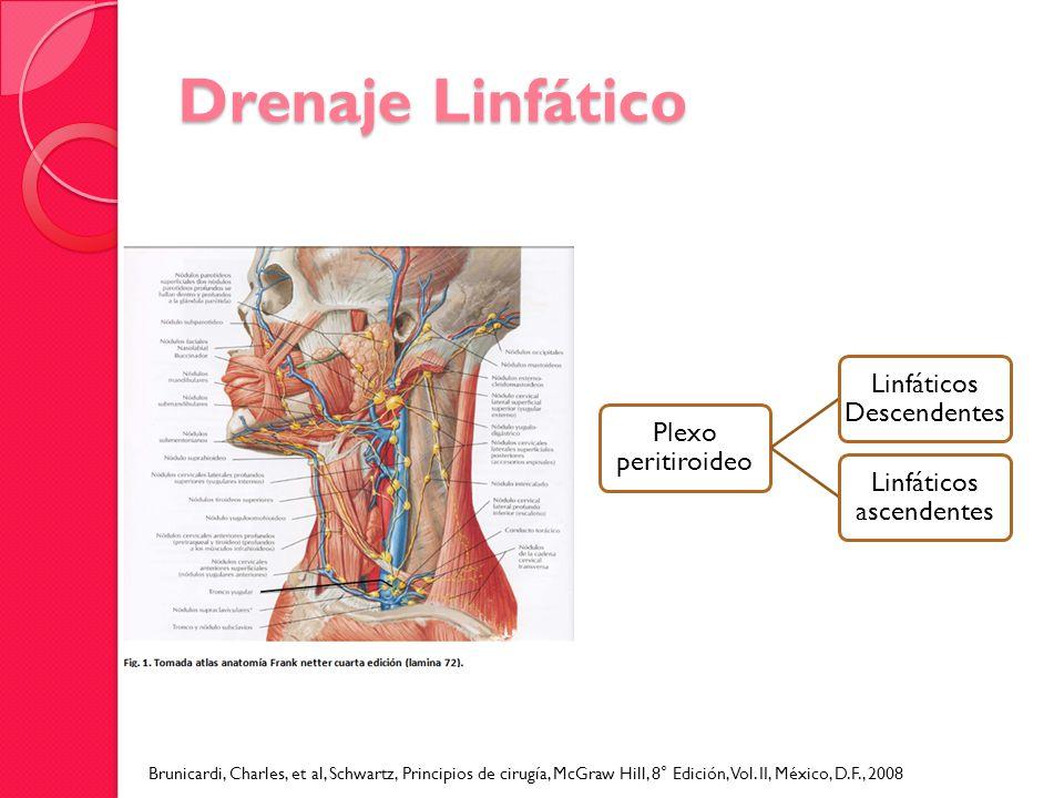 Drenaje Linfático Plexo peritiroideo. Linfáticos Descendentes. Linfáticos ascendentes.