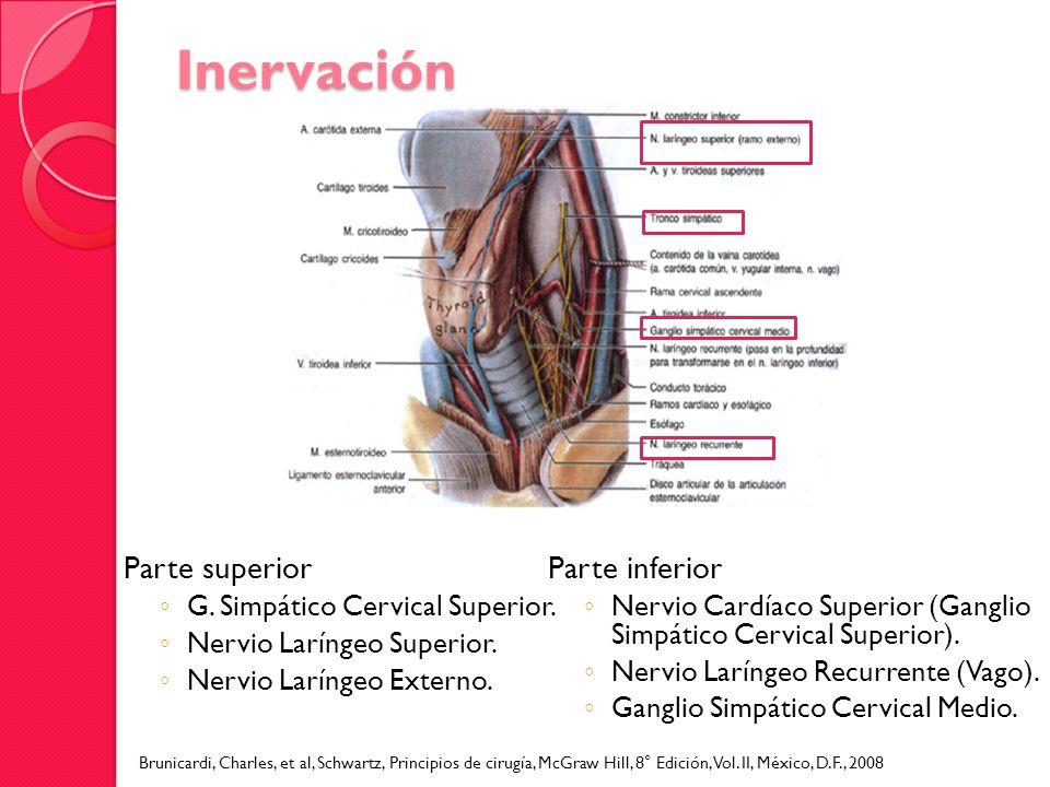 Inervación Parte superior Parte inferior