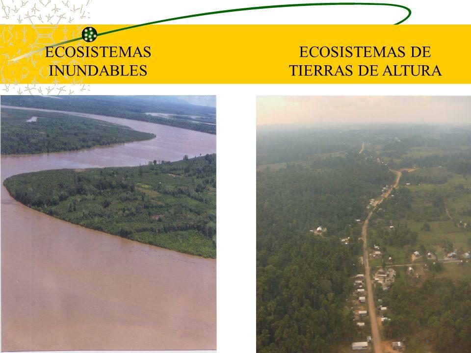 ECOSISTEMAS INUNDABLES ECOSISTEMAS DE TIERRAS DE ALTURA