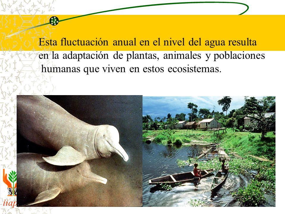 Esta fluctuación anual en el nivel del agua resulta en la adaptación de plantas, animales y poblaciones