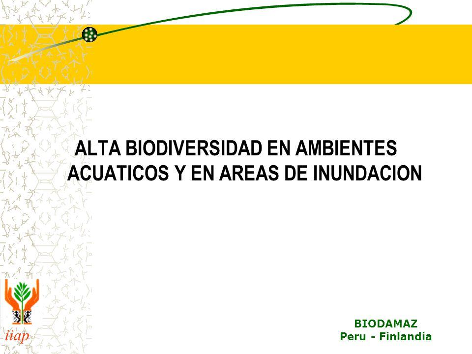 ALTA BIODIVERSIDAD EN AMBIENTES ACUATICOS Y EN AREAS DE INUNDACION