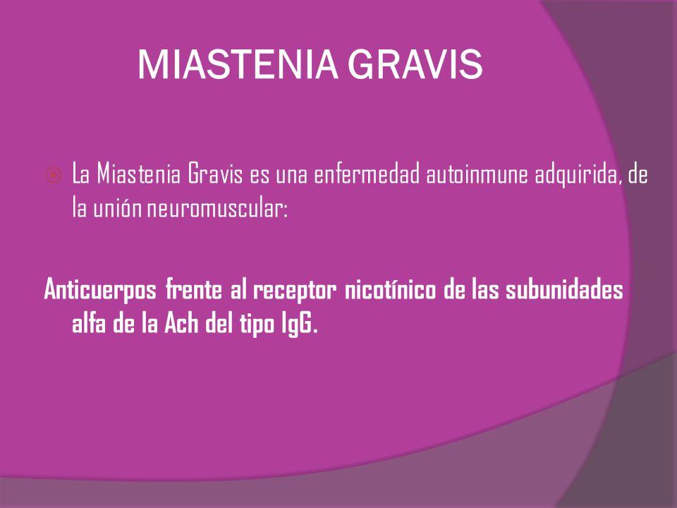 MIASTENIA GRAVIS La Miastenia Gravis es una enfermedad autoinmune adquirida, de la unión neuromuscular:
