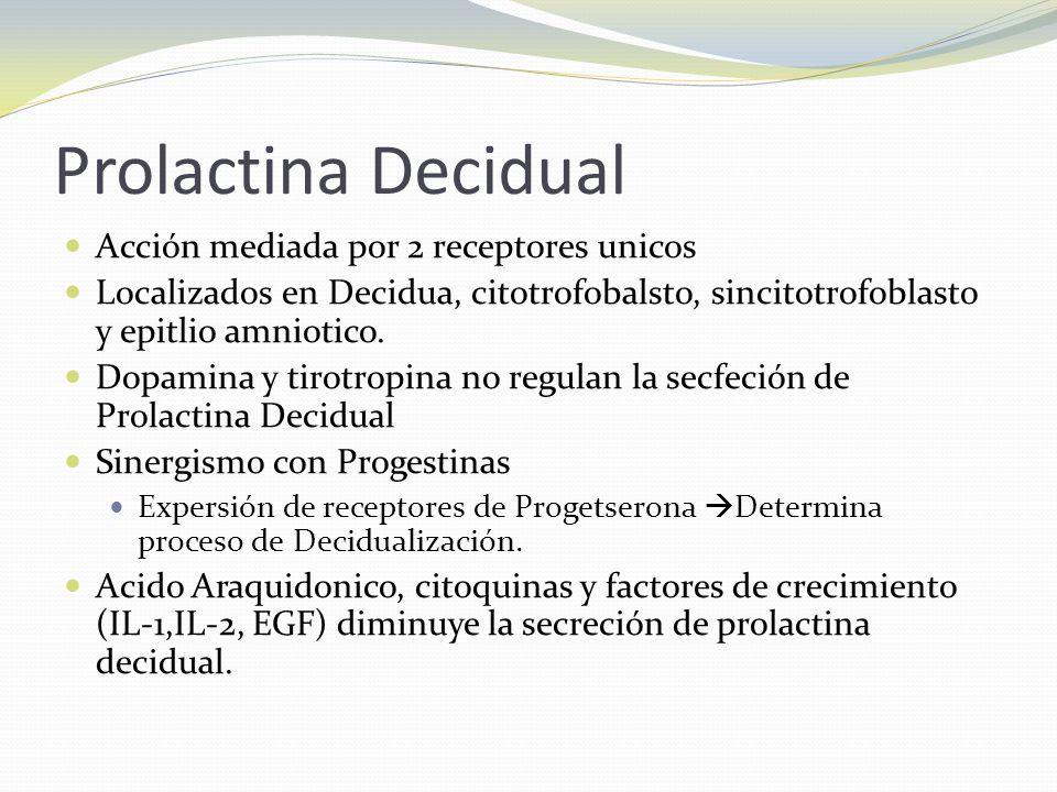 Prolactina Decidual Acción mediada por 2 receptores unicos