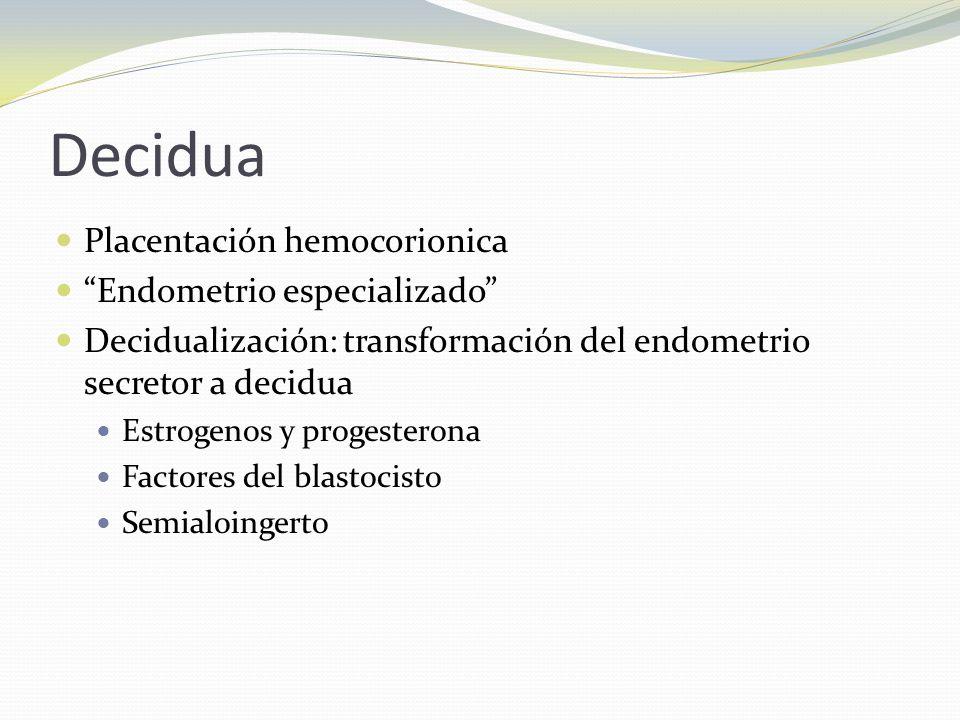 Decidua Placentación hemocorionica Endometrio especializado
