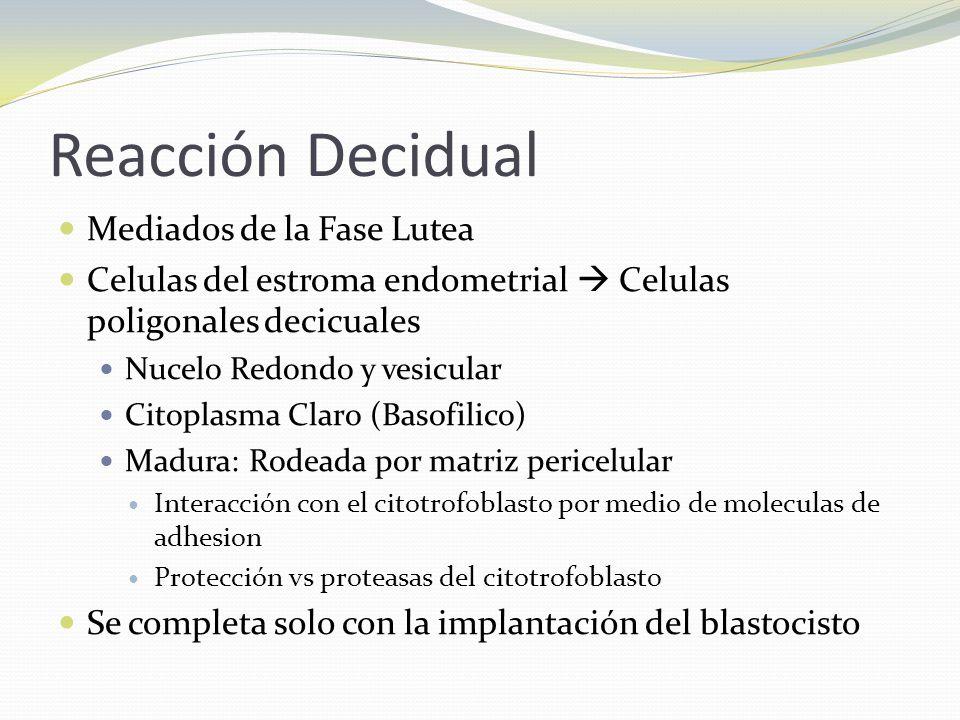 Reacción Decidual Mediados de la Fase Lutea