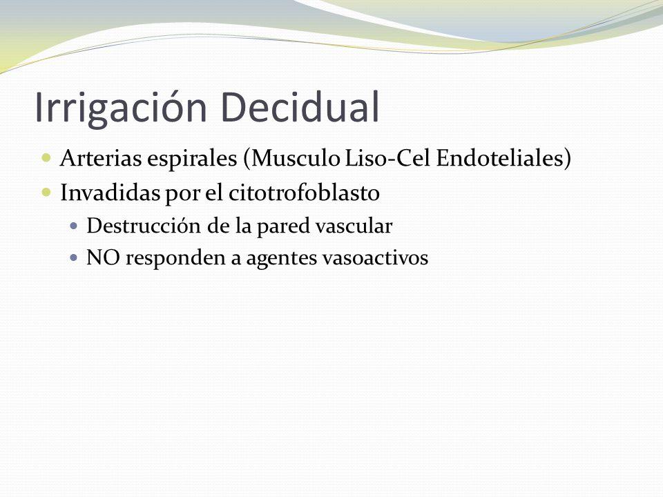 Irrigación Decidual Arterias espirales (Musculo Liso-Cel Endoteliales)
