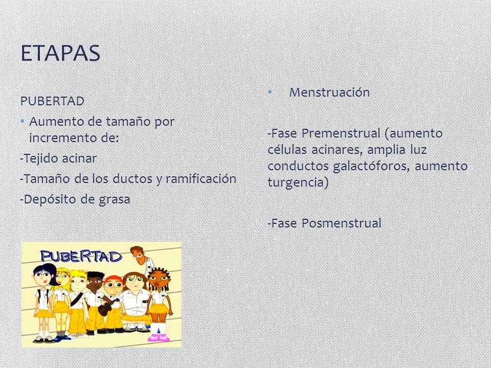 ETAPAS PUBERTAD Menstruación Aumento de tamaño por incremento de: