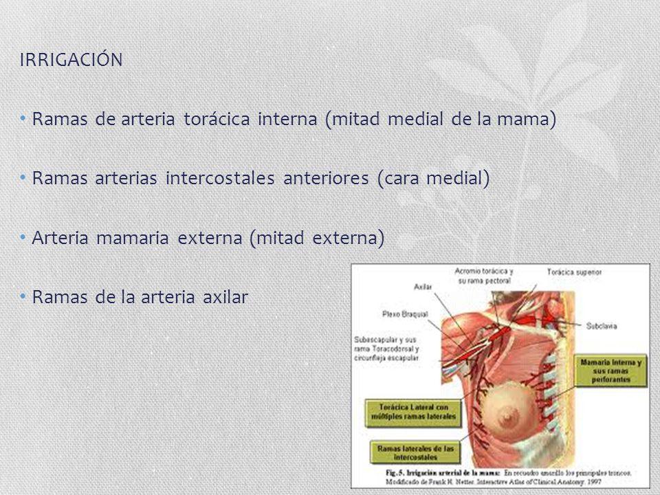 IRRIGACIÓN Ramas de arteria torácica interna (mitad medial de la mama) Ramas arterias intercostales anteriores (cara medial)