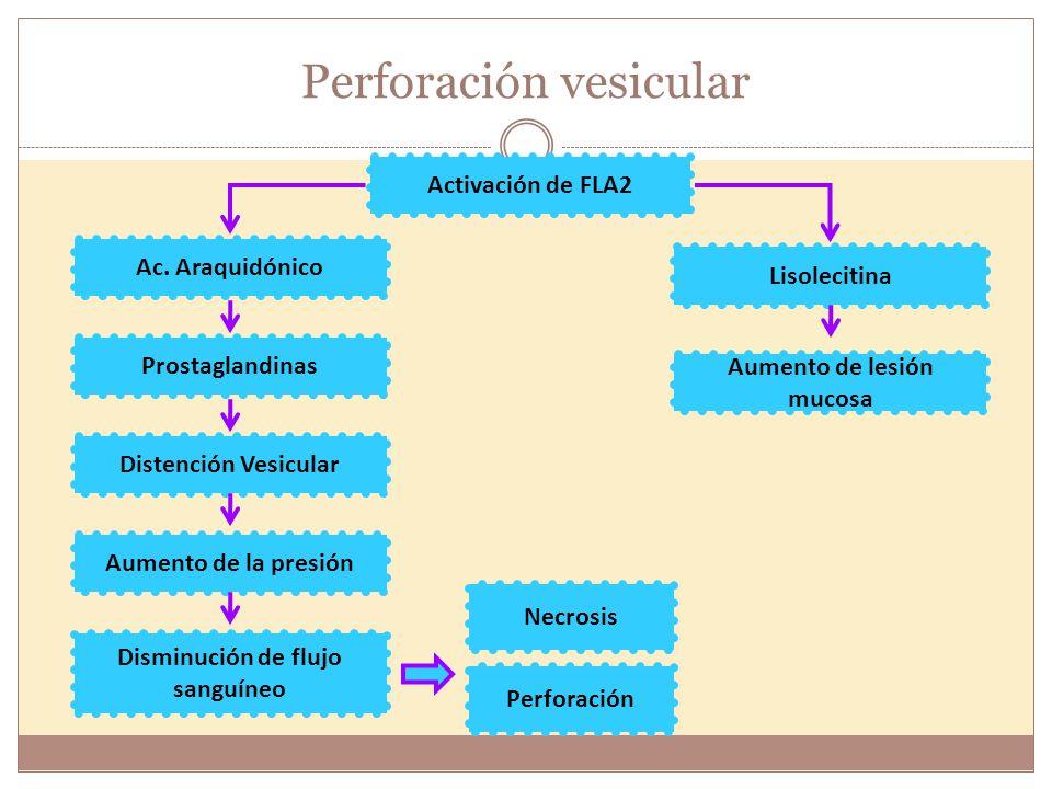 Perforación vesicular