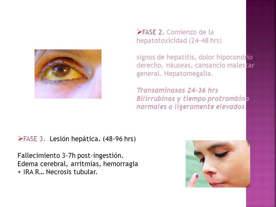 FASE 2. Comienzo de la hepatotoxicidad (24-48 hrs)