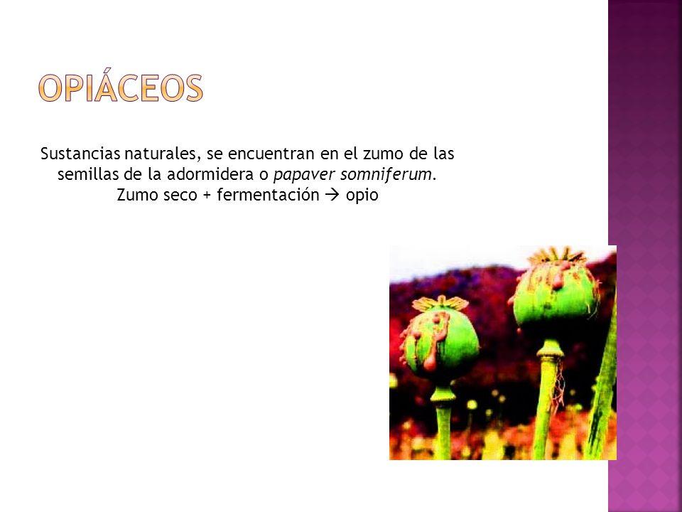 Zumo seco + fermentación  opio