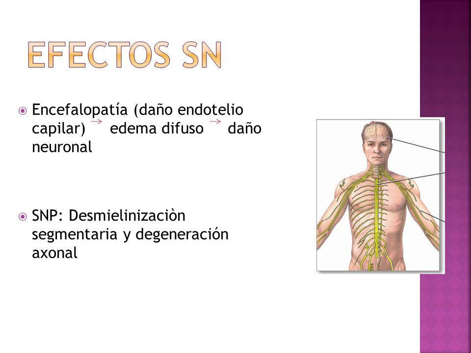 Efectos SN Encefalopatía (daño endotelio capilar) edema difuso daño neuronal.