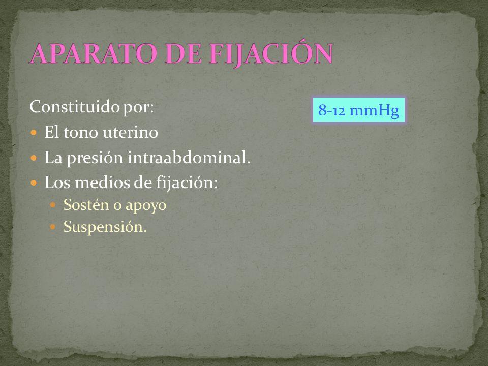 APARATO DE FIJACIÓN Constituido por: El tono uterino