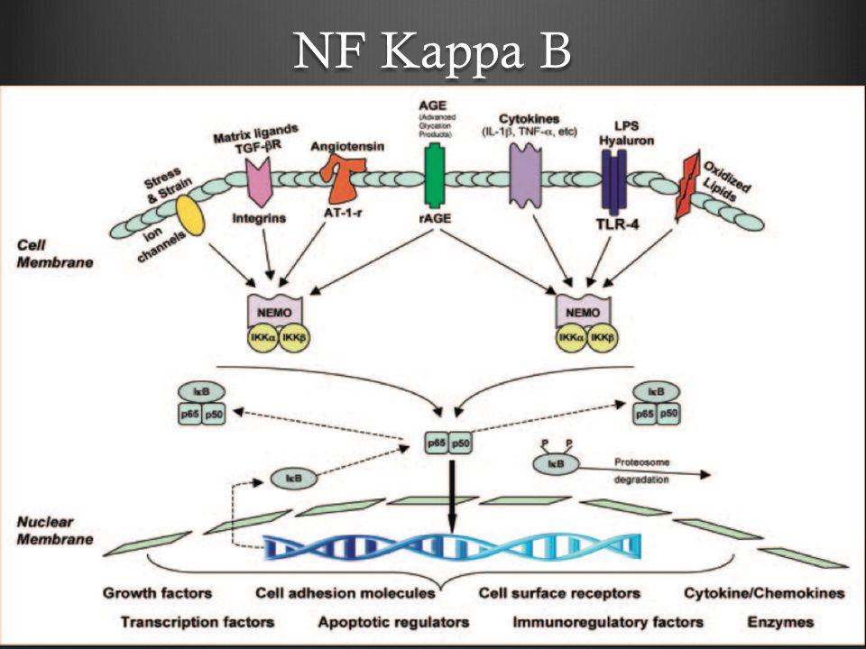 NF Kappa B