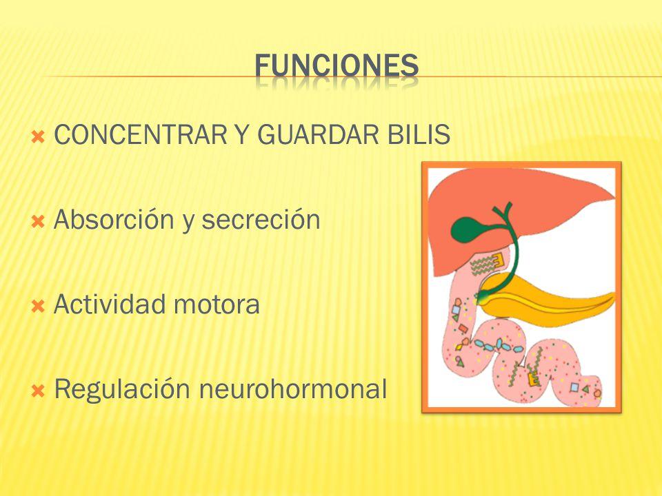FUNCIONES CONCENTRAR Y GUARDAR BILIS Absorción y secreción