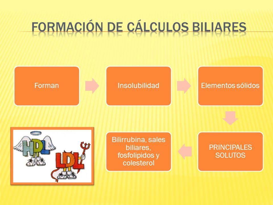 FORMACIÓN DE CÁLCULOS BILIARES