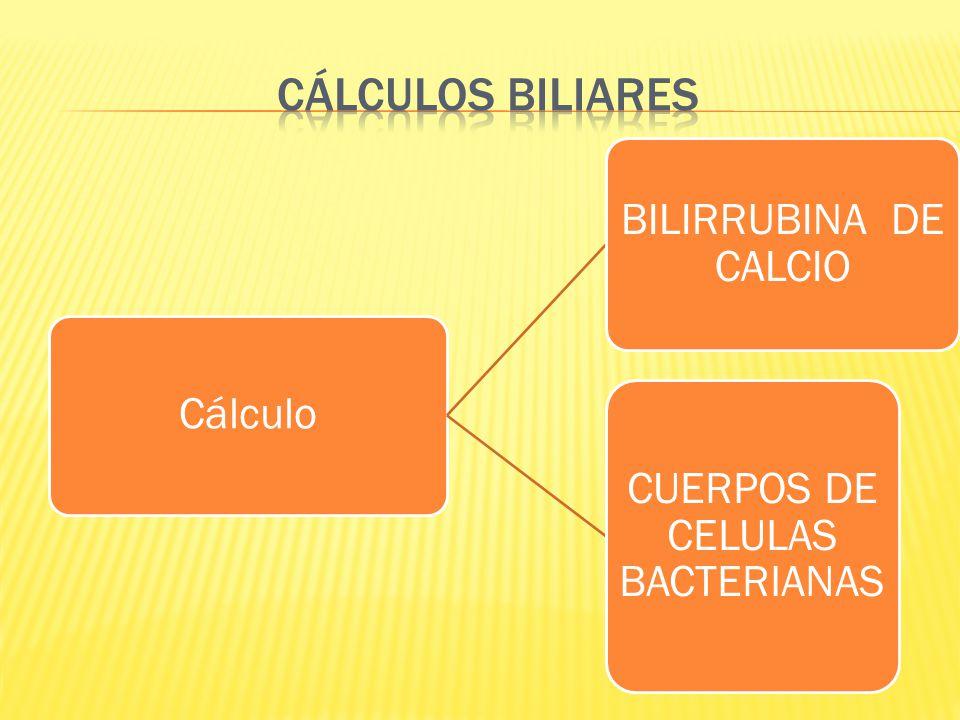CUERPOS DE CELULAS BACTERIANAS