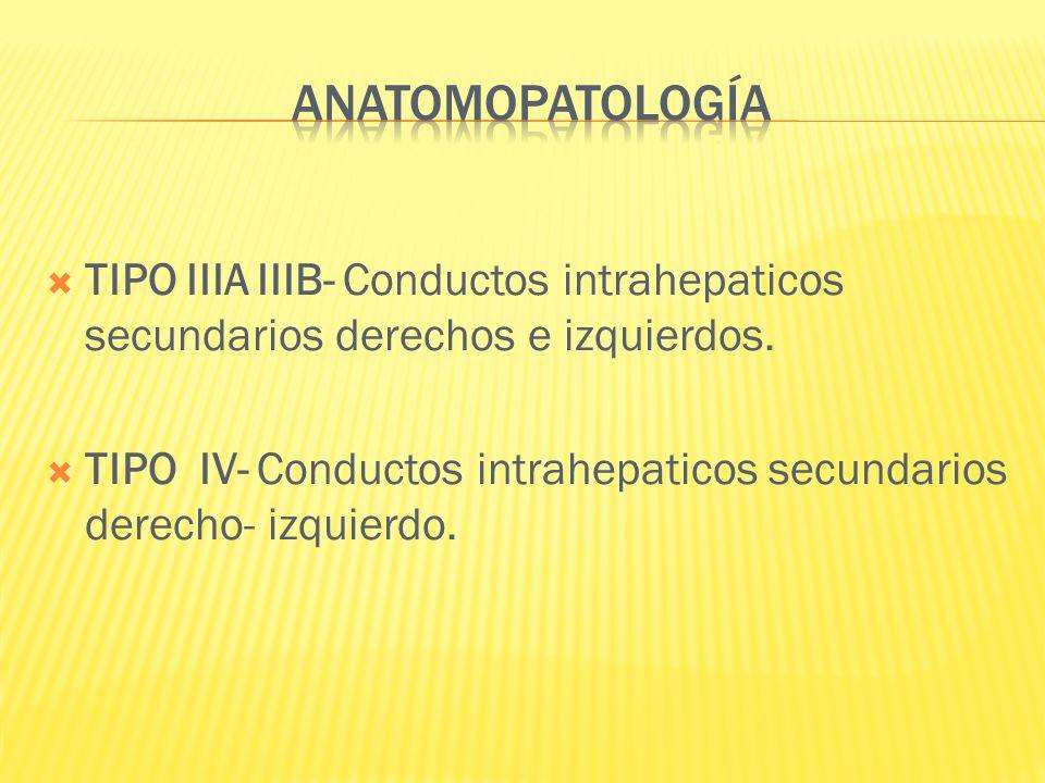 ANATOMOPATOLOGÍA TIPO IIIA IIIB- Conductos intrahepaticos secundarios derechos e izquierdos.