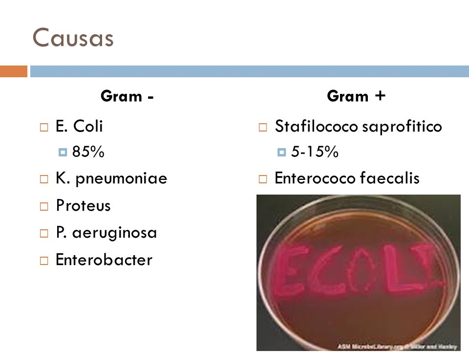 Causas E. Coli K. pneumoniae Proteus P. aeruginosa Enterobacter