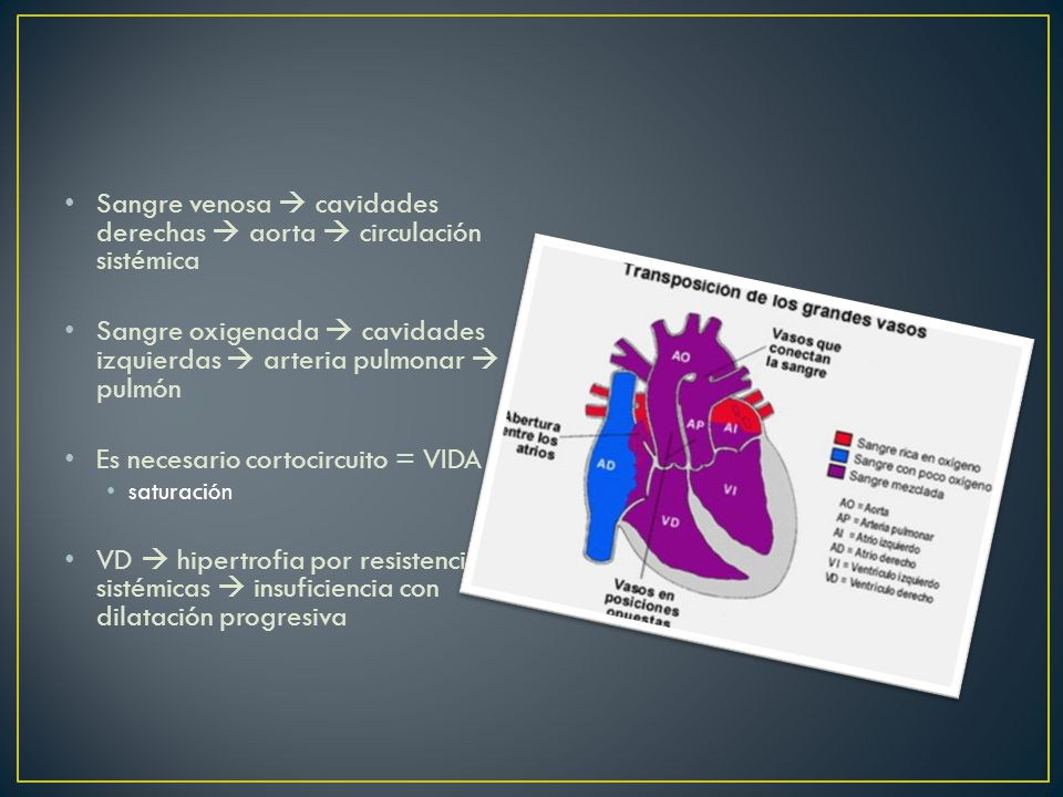 Sangre venosa  cavidades derechas  aorta  circulación sistémica