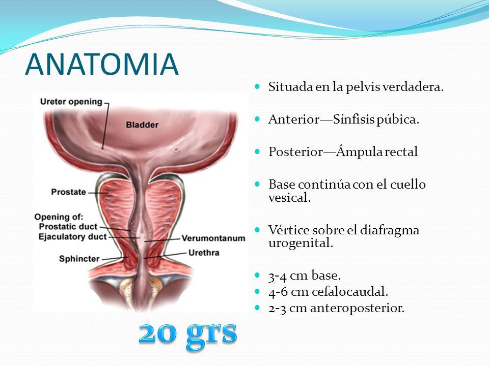 20 grs ANATOMIA Situada en la pelvis verdadera.