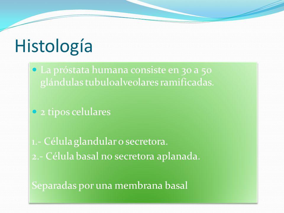 Histología La próstata humana consiste en 30 a 50 glándulas tubuloalveolares ramificadas. 2 tipos celulares.