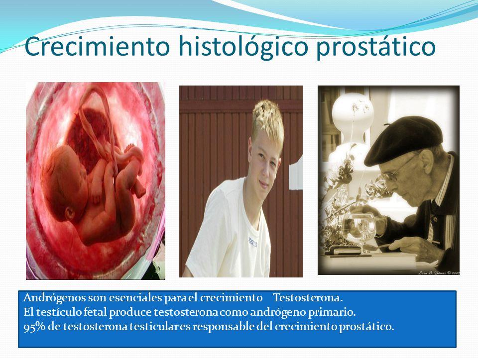 Crecimiento histológico prostático