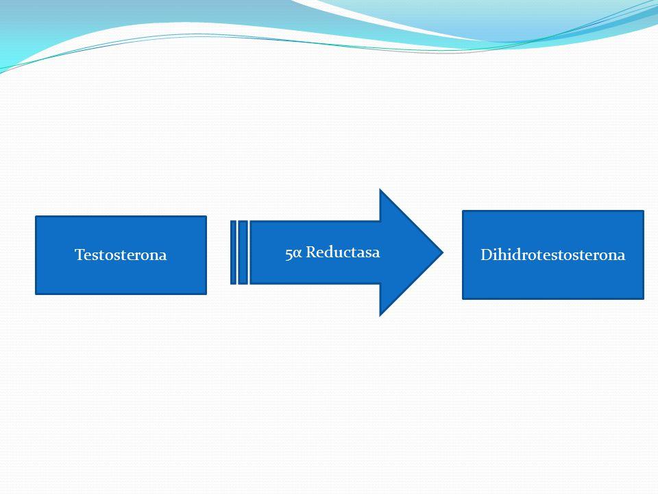 5α Reductasa Dihidrotestosterona Testosterona