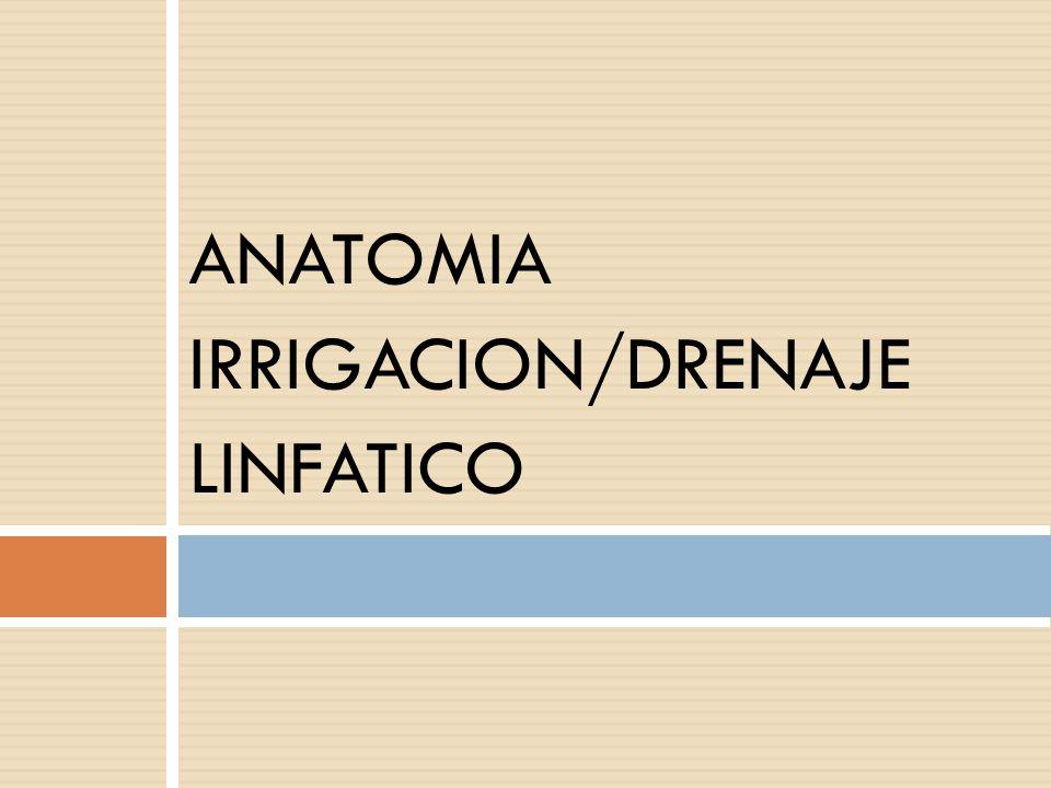 ANATOMIA IRRIGACION/DRENAJE LINFATICO