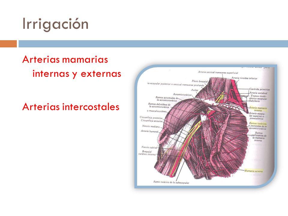 Irrigación Arterias mamarias internas y externas Arterias intercostales