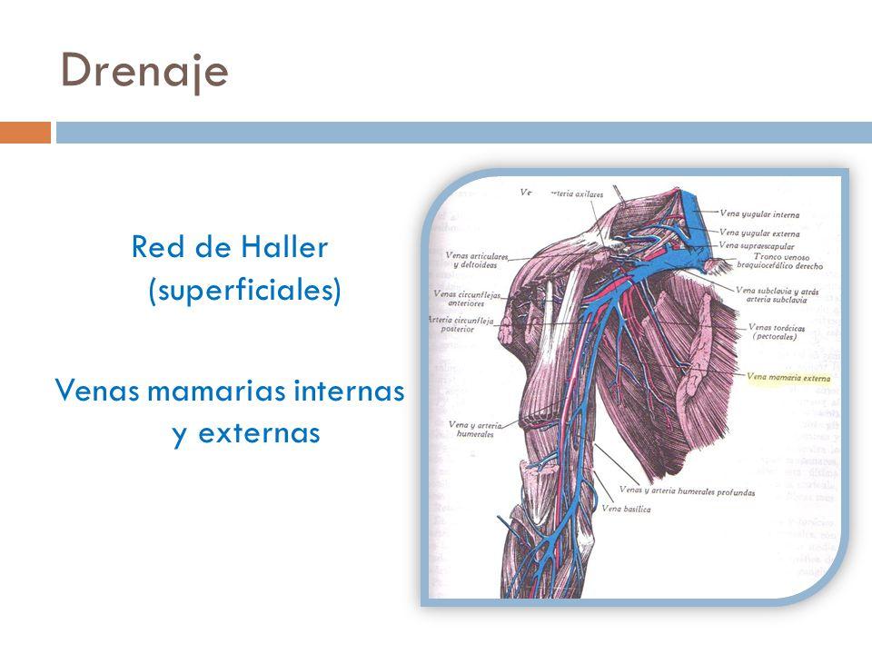 Red de Haller (superficiales) Venas mamarias internas y externas