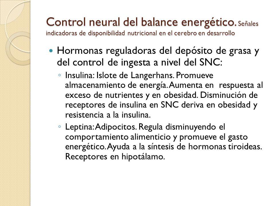 Control neural del balance energético