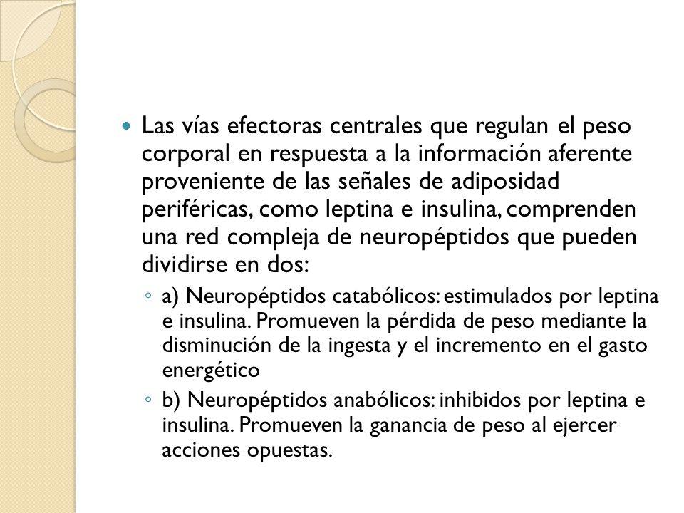 Las vías efectoras centrales que regulan el peso corporal en respuesta a la información aferente proveniente de las señales de adiposidad periféricas, como leptina e insulina, comprenden una red compleja de neuropéptidos que pueden dividirse en dos: