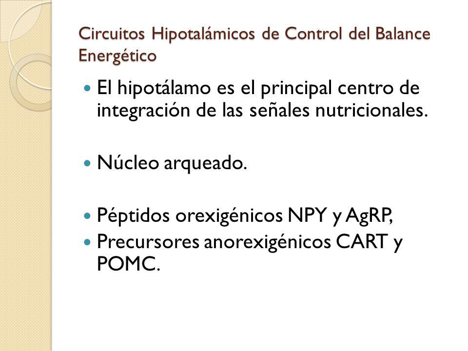 Circuitos Hipotalámicos de Control del Balance Energético