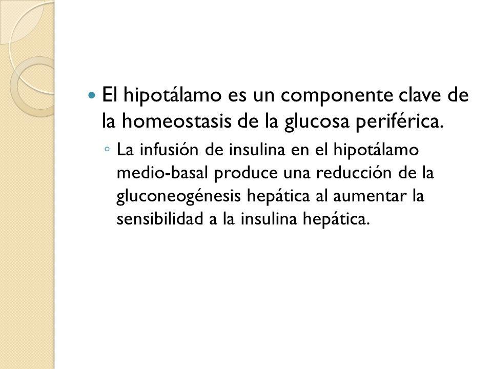 El hipotálamo es un componente clave de la homeostasis de la glucosa periférica.