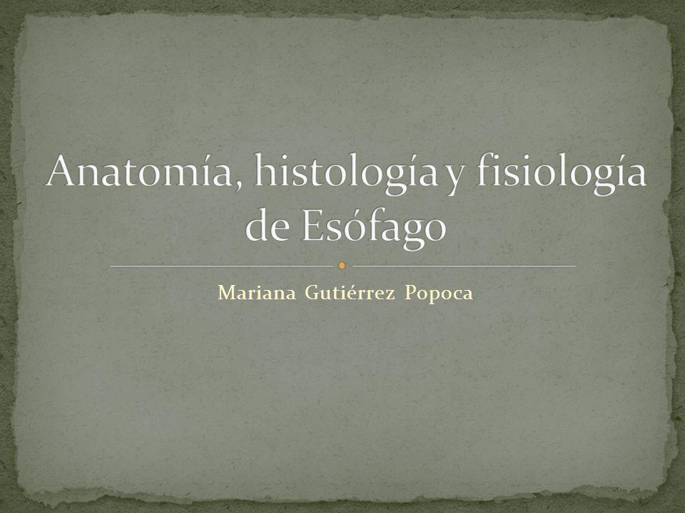 Anatomía, histología y fisiología de Esófago
