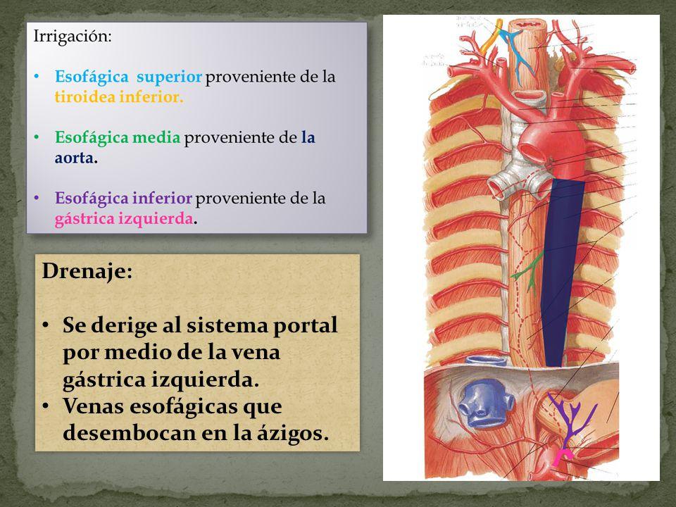 Drenaje: Se derige al sistema portal por medio de la vena gástrica izquierda.
