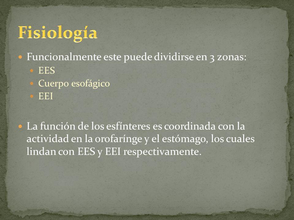 Fisiología Funcionalmente este puede dividirse en 3 zonas: