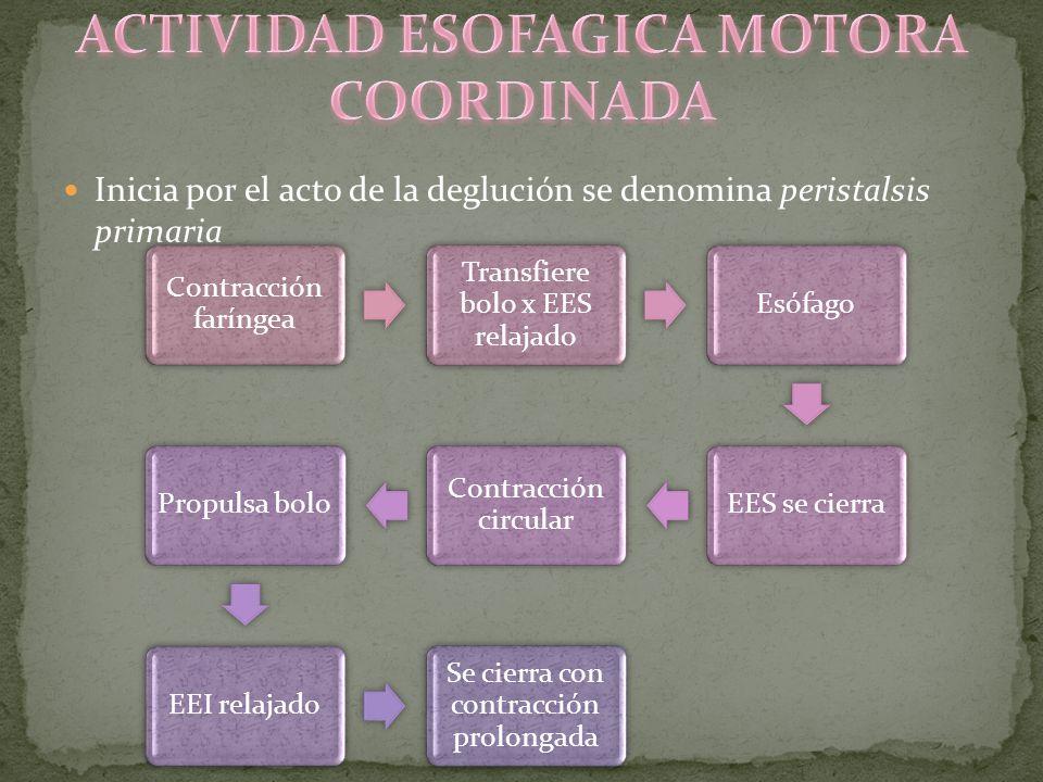 ACTIVIDAD ESOFAGICA MOTORA COORDINADA