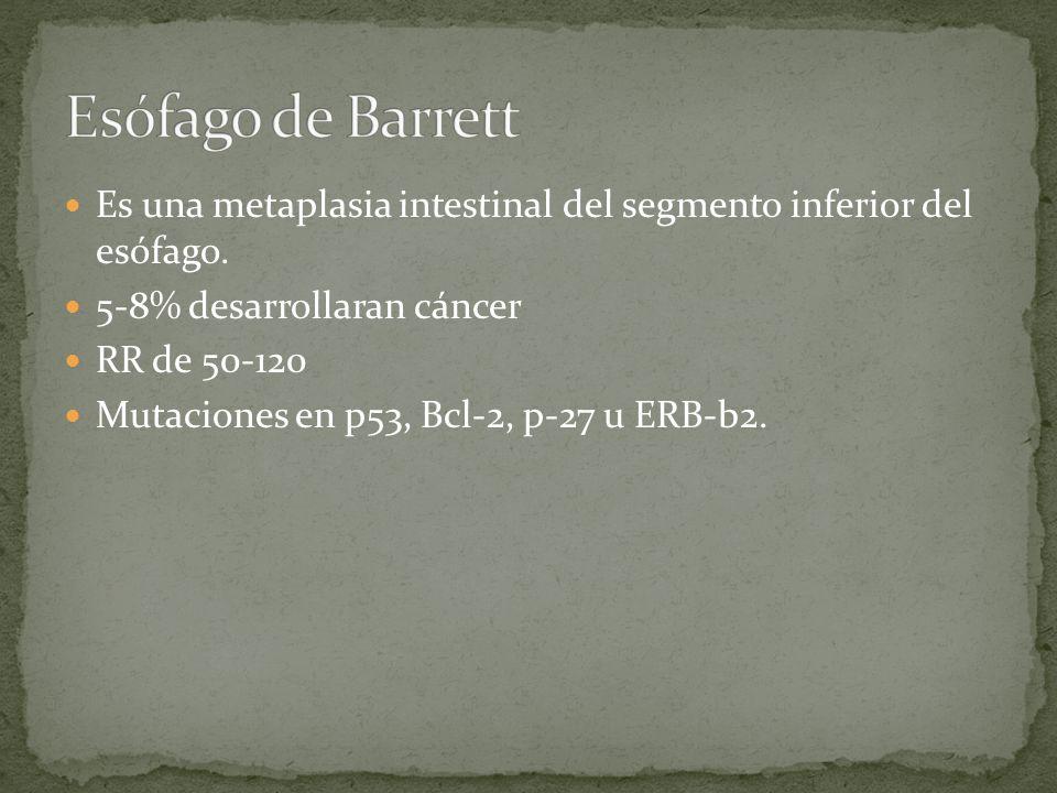Esófago de Barrett Es una metaplasia intestinal del segmento inferior del esófago. 5-8% desarrollaran cáncer.