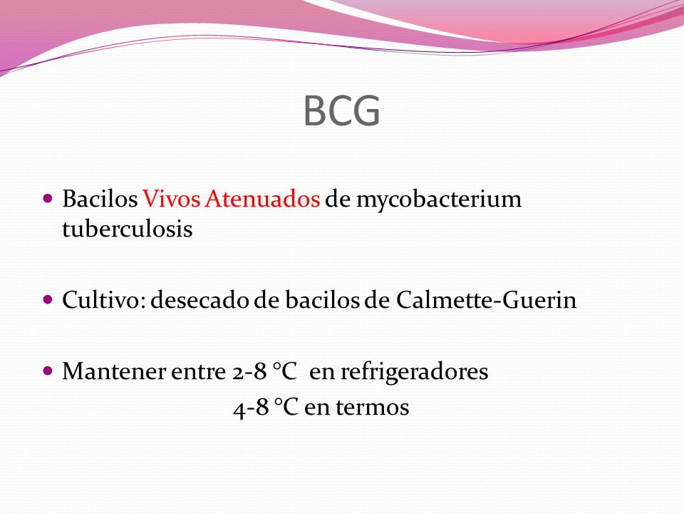 BCG Bacilos Vivos Atenuados de mycobacterium tuberculosis